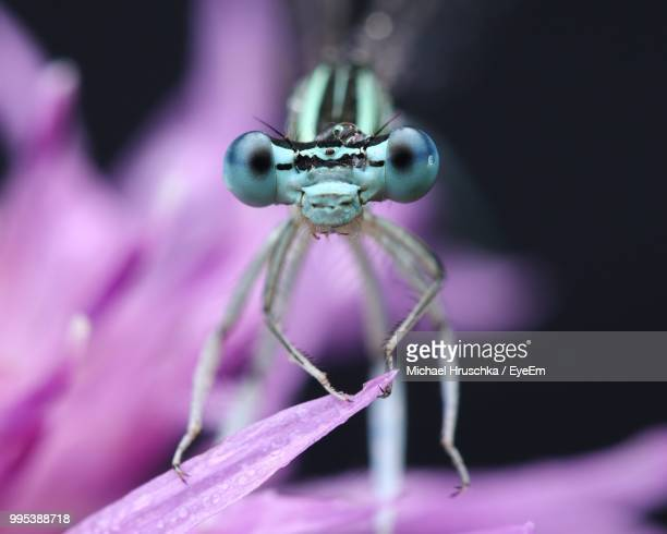 close-up of damselfly on flower - michael hruschka stock pictures, royalty-free photos & images