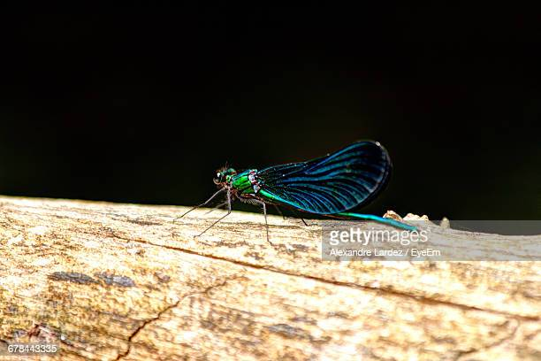 Close-Up Of Damselfly On Wood