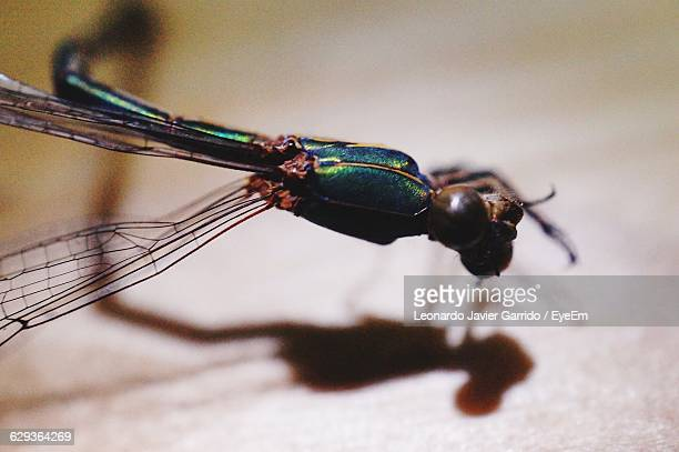 Close-Up Of Damselfly On Wooden Table