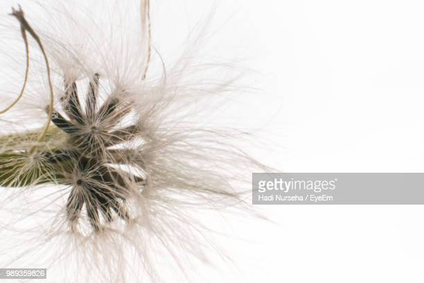 Close-Up Of Dandelion Seed Against Clear Sky