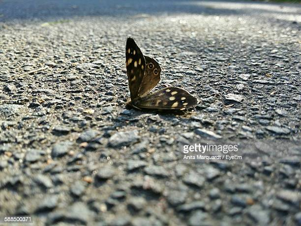 Close-Up Of Dead Butterfly On Road