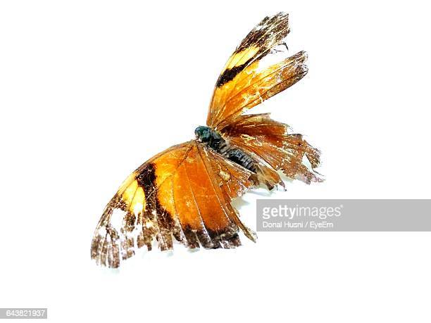 close-up of dead butterfly on white background - dead animal stock pictures, royalty-free photos & images
