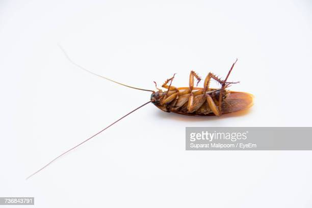 close-up of dead cockroach on white background - cockroach stock photos and pictures
