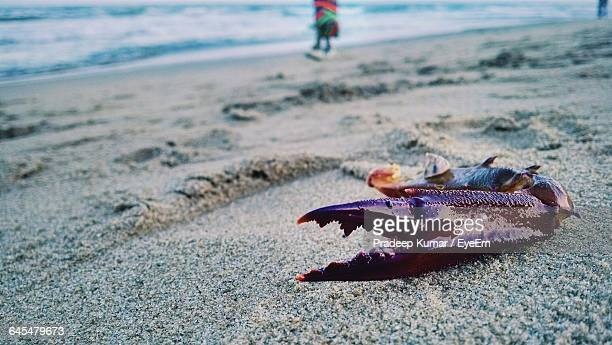 Fiddler Crab Stock Pictures Royalty
