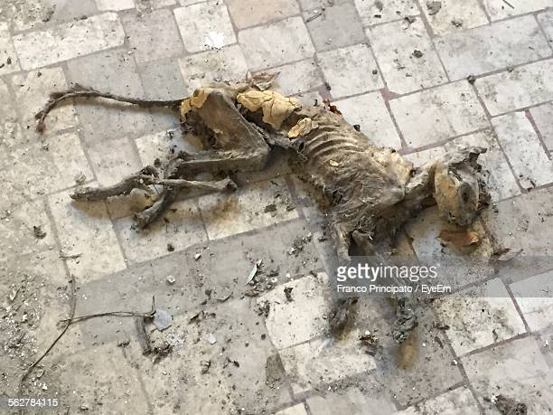 close-up of dead dog on floor - dead dog stock pictures, royalty-free photos & images