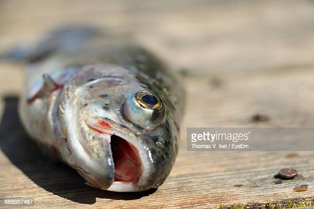 Close-Up Of Dead Fish On Table