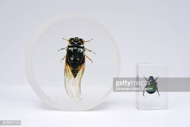 Close-Up Of Dead Insects In Glass Against White Background