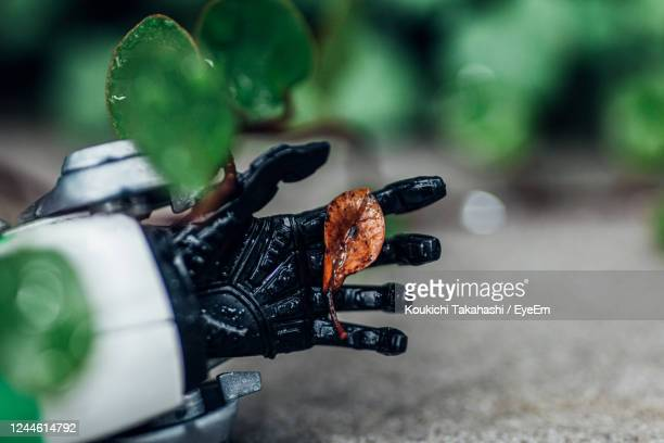 close-up of dead leaf in the hand of  robot - koukichi stock pictures, royalty-free photos & images