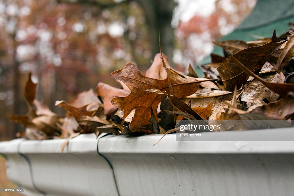Close-up of dead leaves overflowing a gutter : Stock Photo