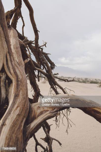 close-up of dead tree against sky - bortes stock pictures, royalty-free photos & images