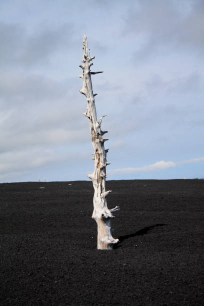 Close-Up Of Dead Tree On Field Against Sky, Otrada, Russia