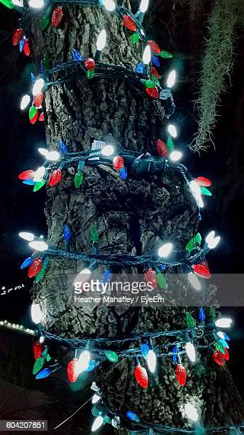 close-up of decorative illuminated lights on tree at night during christmas - palm harbor stock pictures, royalty-free photos & images