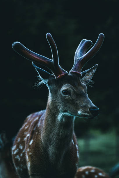 Close-Up Of Deer In A Forest