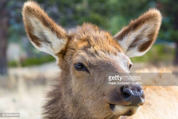 close-up of deer - frank schrader stock pictures, royalty-free photos & images