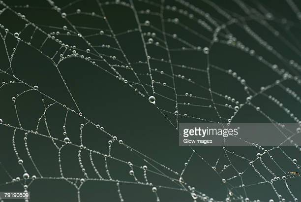 Close-up of dew drops on a spider web