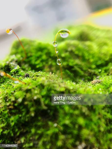 Close-Up Of Dew Drops On Moss