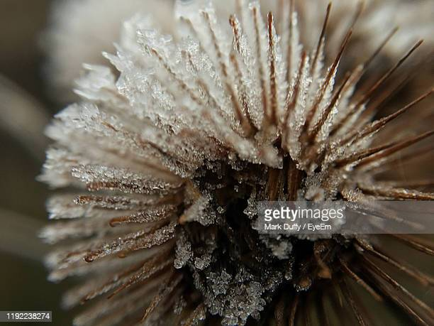 close-up of dew on snow covered plant - mark bloom stock pictures, royalty-free photos & images