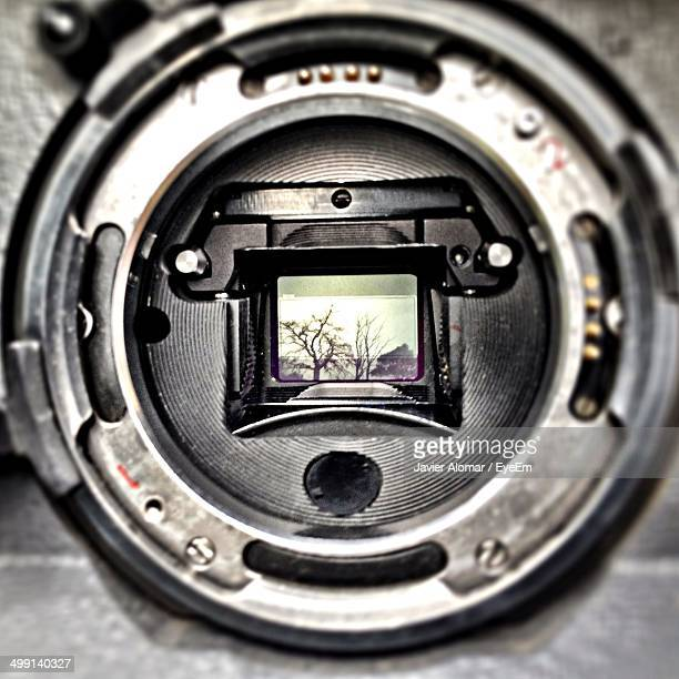 Close-up of digital viewfinder with tree scene
