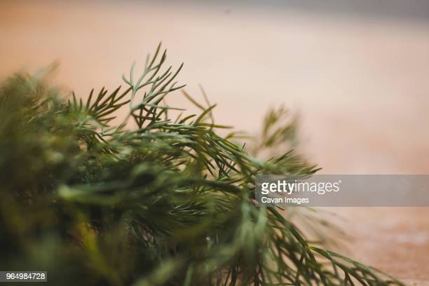 Close-up of dill on table
