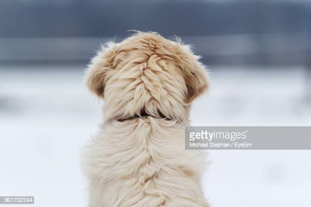 Close-Up Of Dog Against During Winter