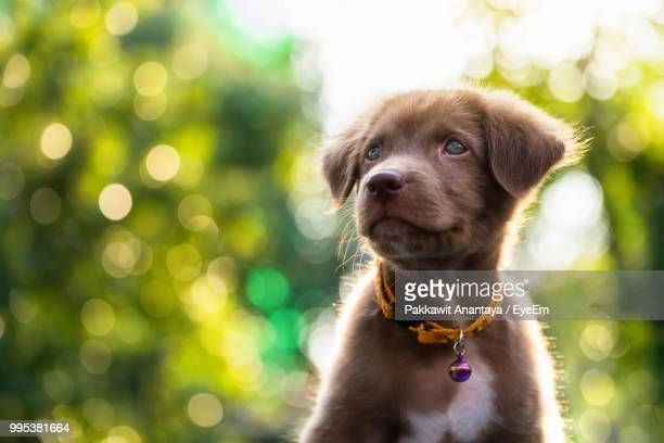 close-up of dog against trees - dog tag stock photos and pictures