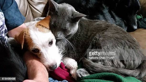 Close-up of dog and cat resting together