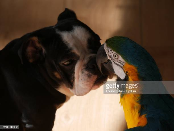 Close-Up Of Dog And Macaw