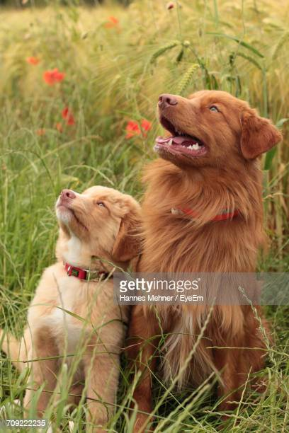 Close-Up Of Dog And Puppy On Grass