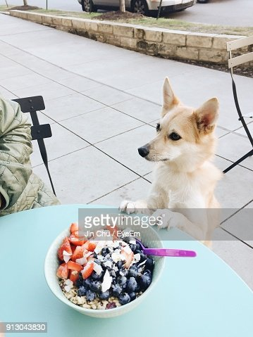 Close-Up Of Dog By Breakfast On Table