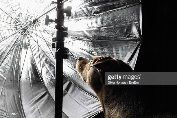 Close-Up Of Dog By Illuminated Reflection In Darkroom