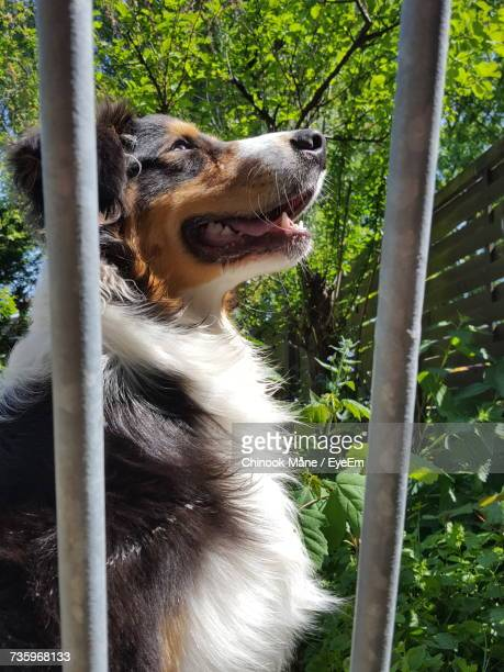 close-up of dog by tree - chinook dog stock photos and pictures