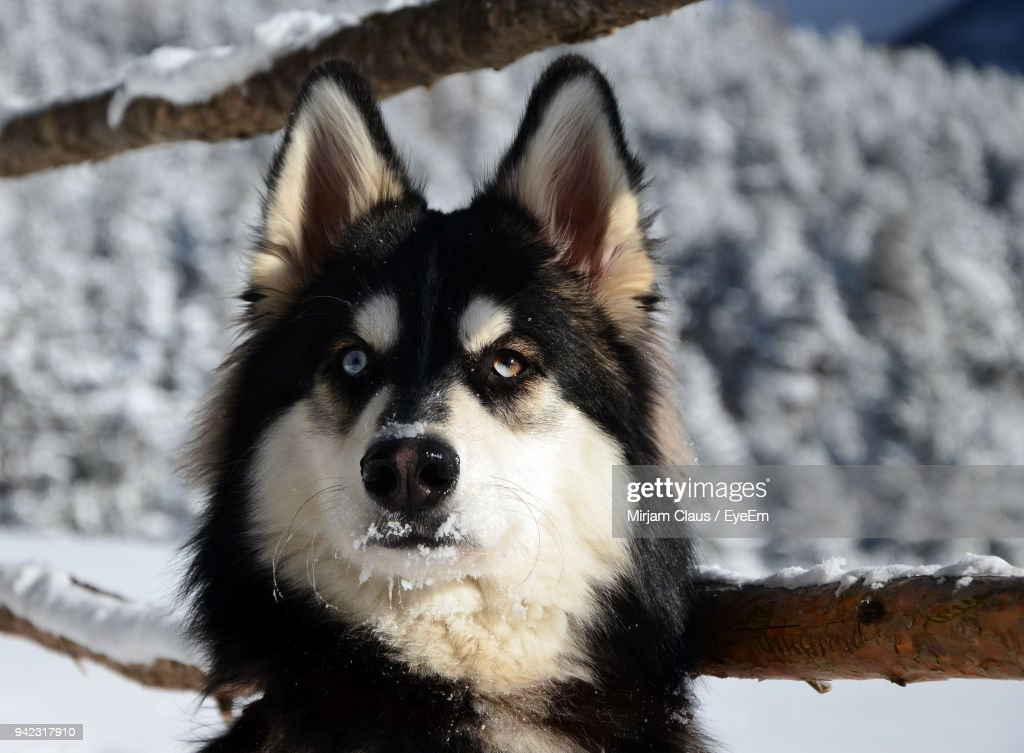 Close-Up Of Dog During Winter : Stock-Foto