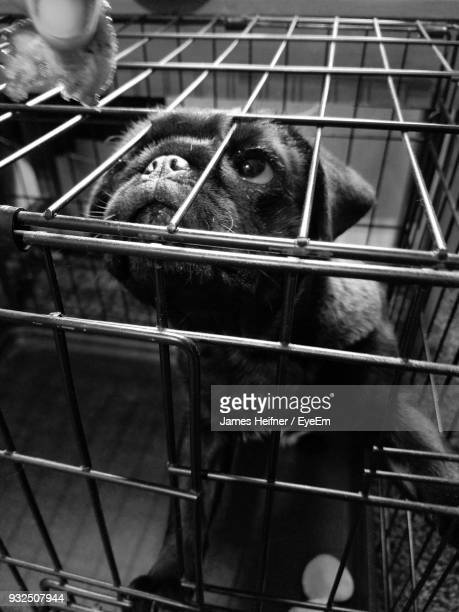 Close-Up Of Dog In Cage