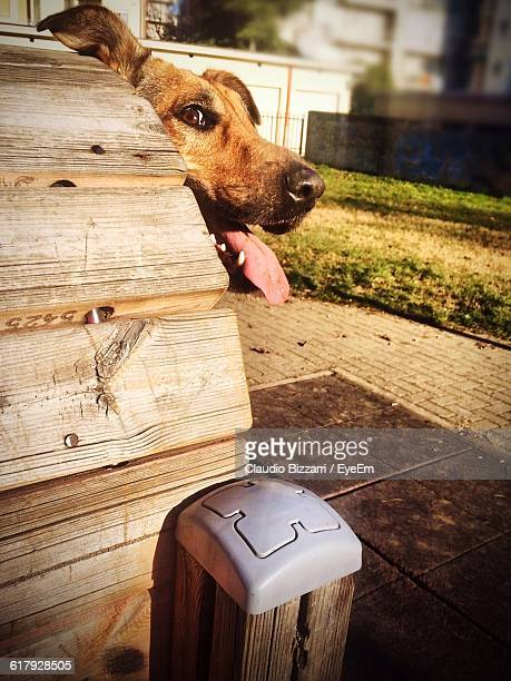 Close-Up Of Dog In Kennel