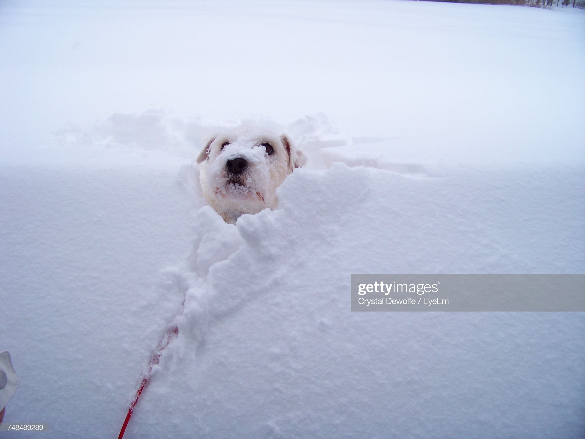 Close-Up Of Dog In Snow : Stockfoto