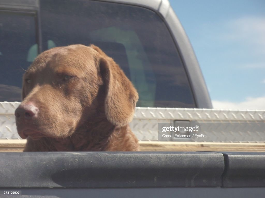 Close-Up Of Dog In Vehicle : Bildbanksbilder