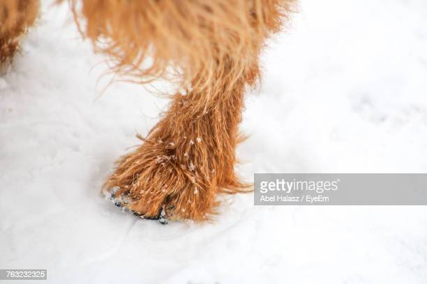 Close-Up Of Dog Leg During Winter