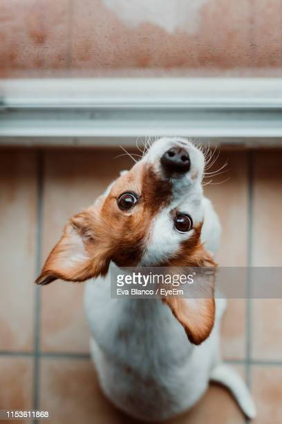 close-up of dog looking away by window - animaux domestiques photos et images de collection