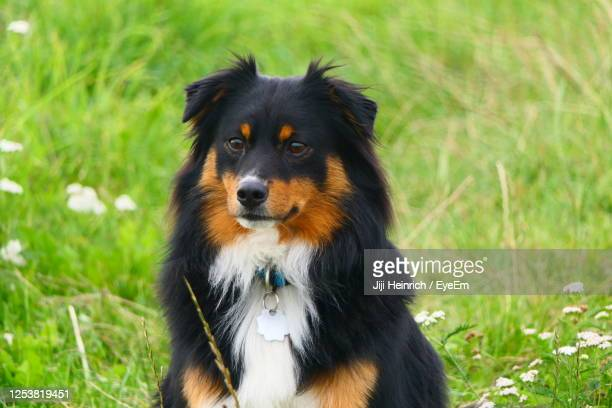 close-up of dog looking away on field - mongrel dog stock pictures, royalty-free photos & images