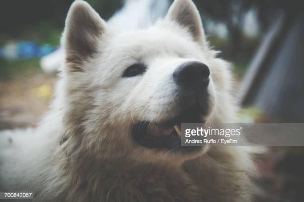 close-up of dog looking away - andres ruffo bildbanksfoton och bilder