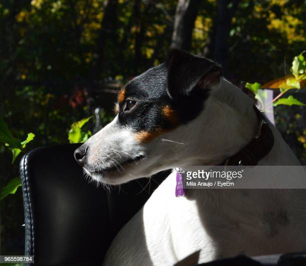 Close-Up Of Dog Looking Away While Sitting On Chair