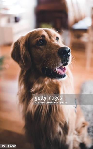 Close-Up Of Dog Looking Away While Standing At Home