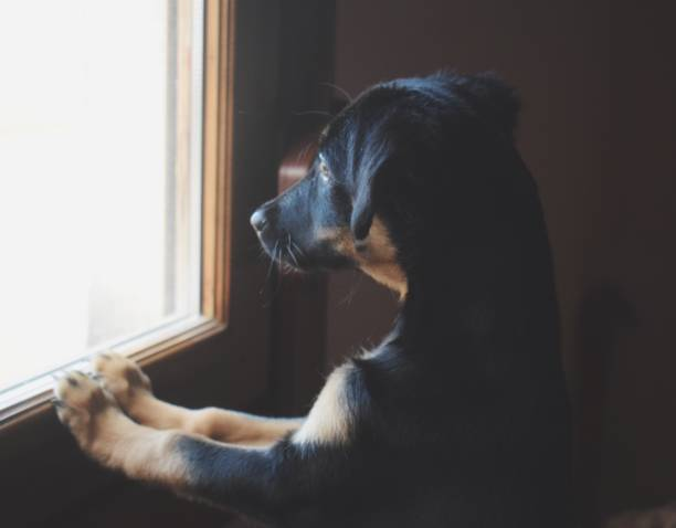 Close-Up Of Dog Looking Through Window While Rearing Up At Home