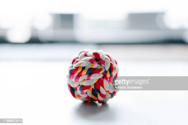 close-up of dog multi colored ball on floor - イヌのおもちゃ ストックフォトと画像