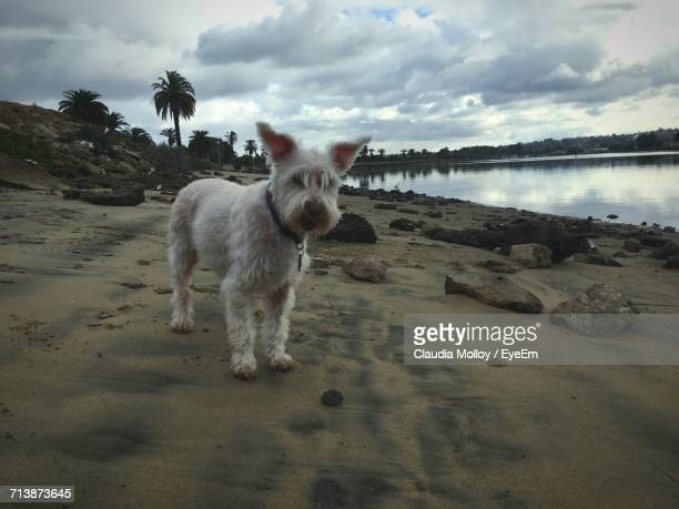 close-up of dog on beach - sandy molloy stock photos and pictures