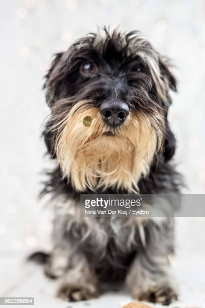 Close-Up Of Dog On White Background