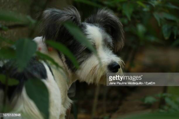 close-up of dog outdoors - herbivorous stock pictures, royalty-free photos & images