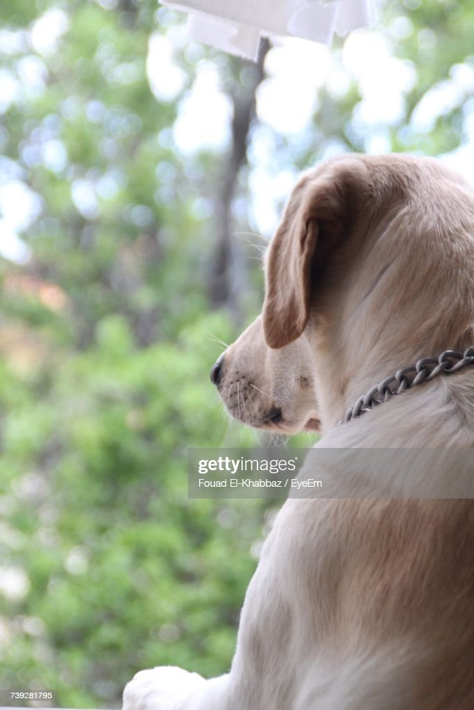 Close-Up Of Dog Outdoors : Stock Photo