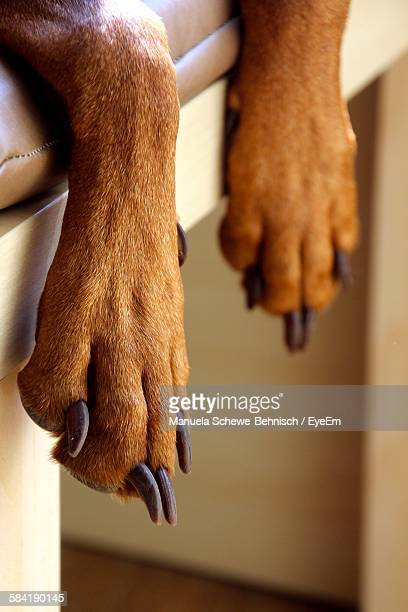 Close-Up Of Dog Paw On Bed At Home