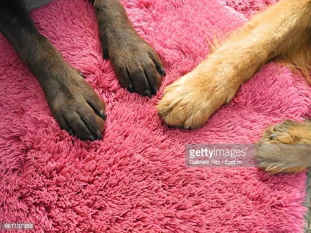 close-up of dog paw - paw stock pictures, royalty-free photos & images